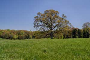 Farm and hay land in Louisa County VA for Sale